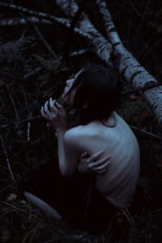 pale autumn in dark woods nature photo by photographer natalie ina