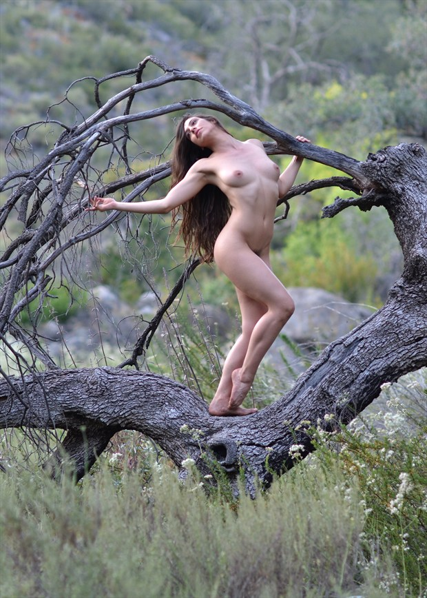 plea to save the oaks artistic nude artwork by photographer alan h bruce