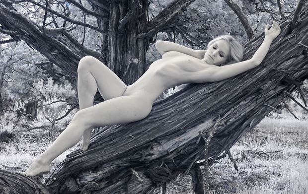 reclining nude on juniper artistic nude photo by photographer shootist