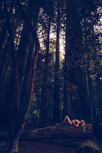 redwood national forest artistic nude photo by model andrea noeli