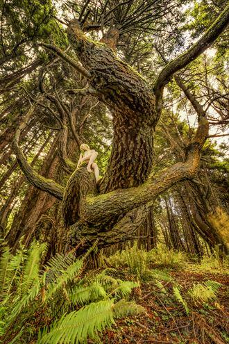 riding the shady dell doug fir dragon nature photo by photographer treegirl