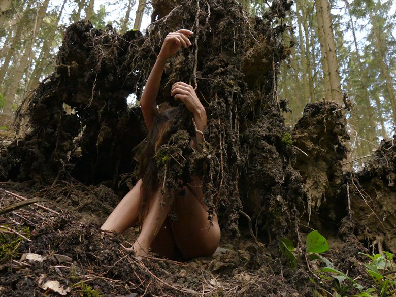 roots Nature Photo by Model Nelenu