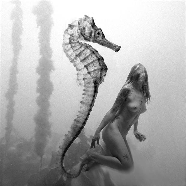 sea horse fantasy photo by artist jean jacques andre