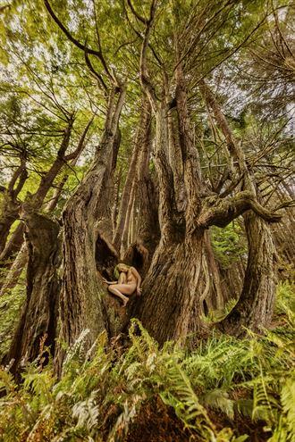 shady dell redwood heart fairy nature photo by photographer treegirl
