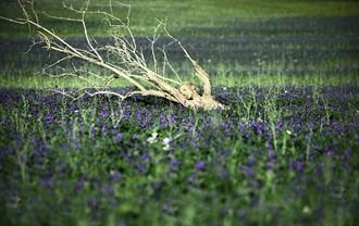 silent blue Nature Photo by Photographer Laila Pregizer