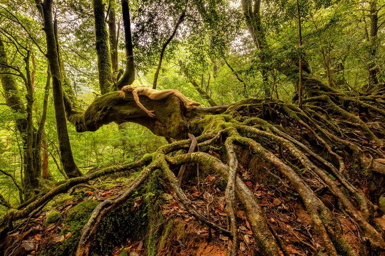 stewartia mossy mystery artistic nude photo by photographer treegirl