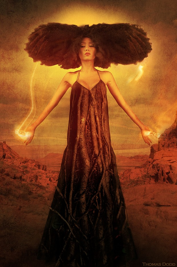 the Phoenix Nature Artwork by Photographer Thomas Dodd