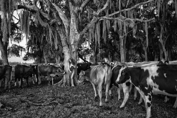 the cows told me nature photo by photographer bradmiller