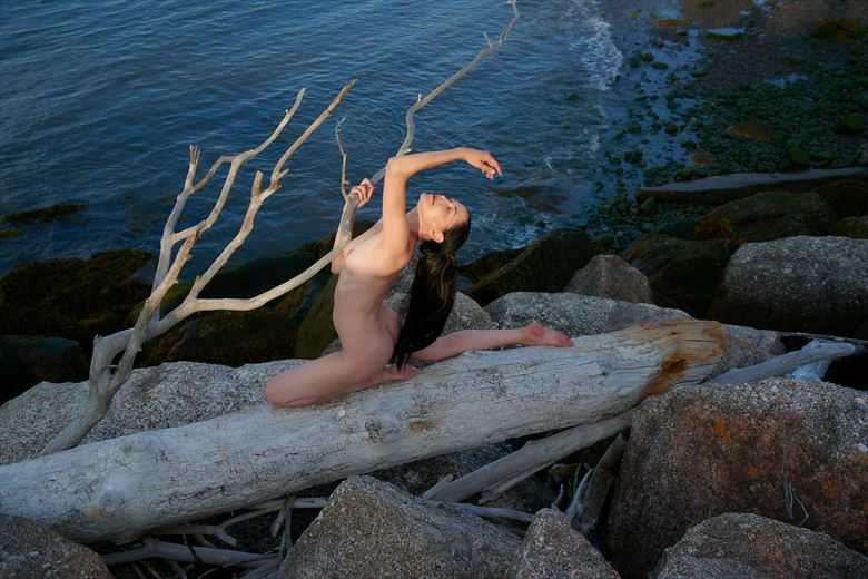 the driftwood tree artistic nude artwork by photographer daniel tirrell photo