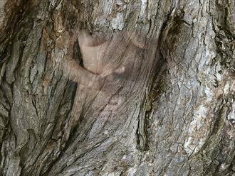 the tree artistic nude artwork by photographer studiovi2