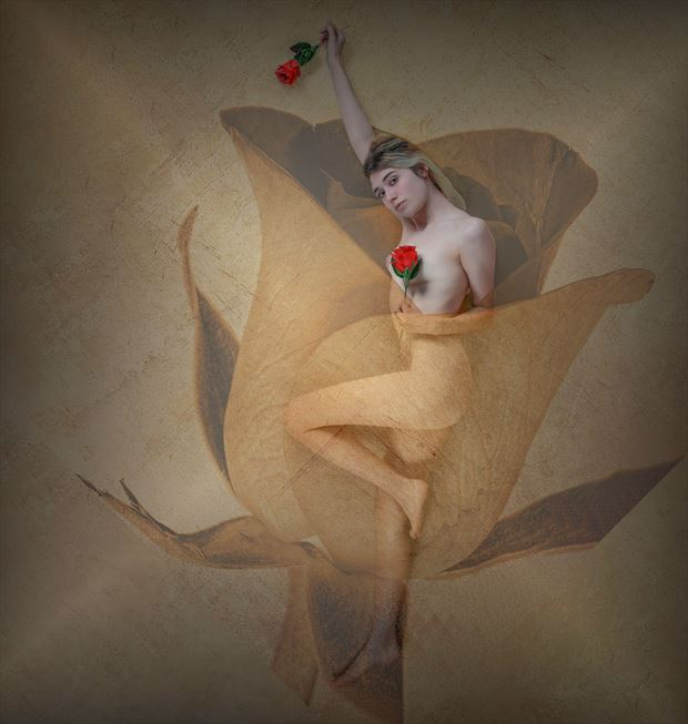translucent rose artistic nude photo by photographer tj