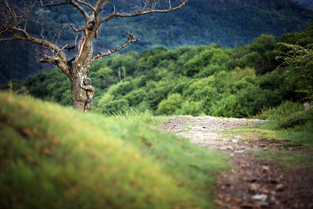 tree%C2%B4s secret Artistic Nude Photo by Photographer Laila Pregizer