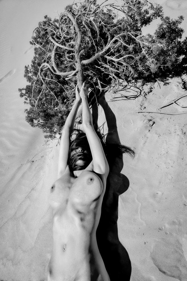 tree of life artistic nude photo by photographer philip turner