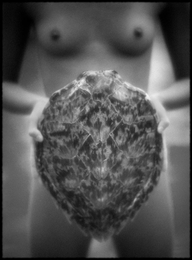 turtle shell artistic nude photo by photographer bradmiller