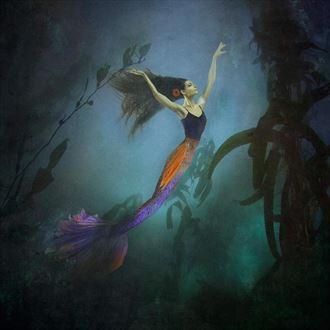 under the sea nature photo by photographer crystallynn