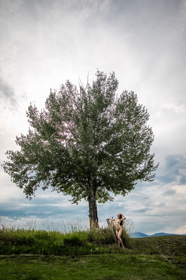 under the tree nature photo by photographer eric upside brown