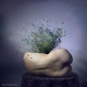 vase Artistic Nude Photo by Photographer Anca Cernoschi