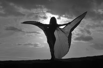 wings Natural Light Artwork by Photographer photohh