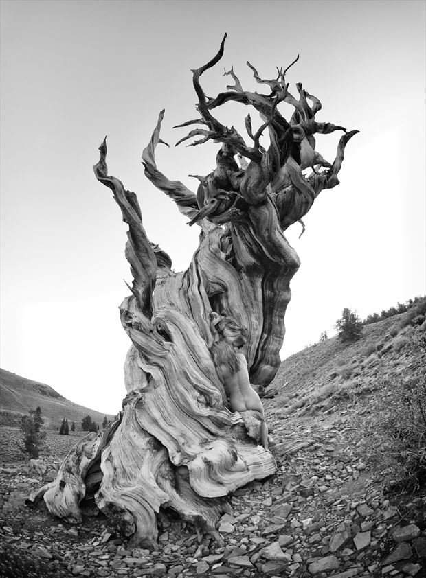 woman blending in with 3 000 toes old tree nature photo by photographer bradmiller