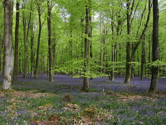 woodland in spring nature photo by photographer psychefineart