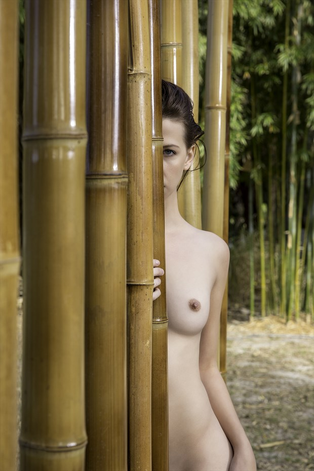 Around the bamboo Artistic Nude Artwork print by Photographer Chris Gursky