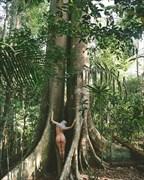 Artistic Nude Nature Photo print by Model Satya
