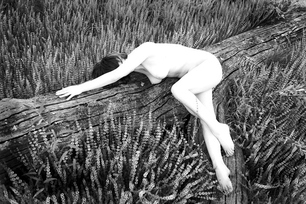 Log and flowers Artistic Nude Photo print by Photographer Joe Klune Fine Art