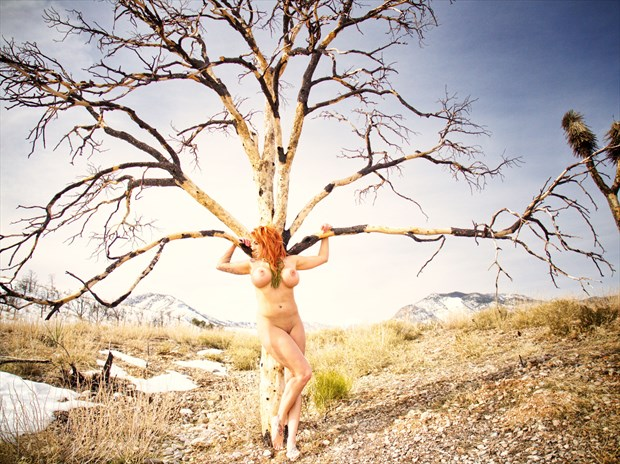Nude Tree Artistic Nude Photo print by Photographer Barry Gallegos