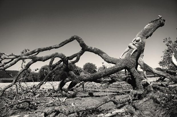 Olga on broken oak tree Artistic Nude Photo print by Photographer Joe Klune Fine Art