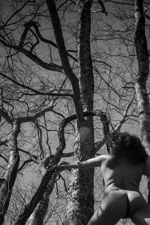She climbs trees Artistic Nude Photo print by Photographer Frisson Art