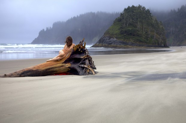 Solo, female nude, reclining on driftwood tree, at seaside. Artistic Nude Photo print by Photographer Larry