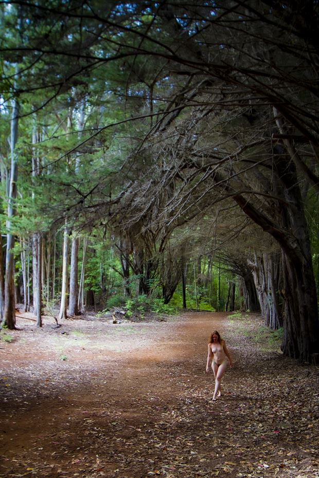 a walk under the tall ones artistic nude photo print by photographer opp_photog