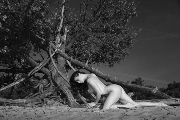 a wood pile artistic nude photo print by photographer louis sauter