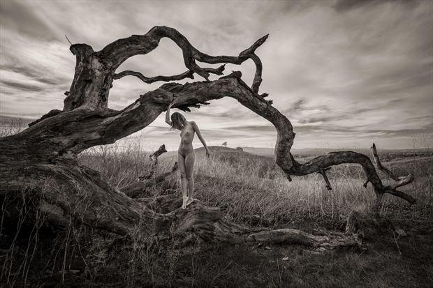 lament for a fallen oak artistic nude photo print by photographer randall hobbet