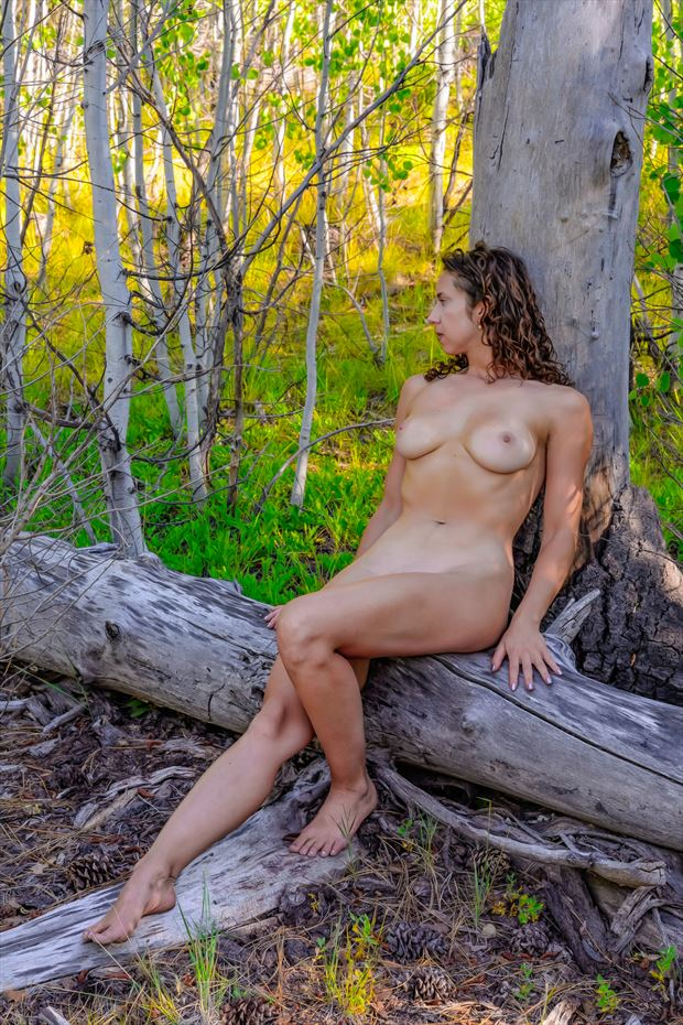 nude in the aspens artistic nude photo print by photographer philip turner