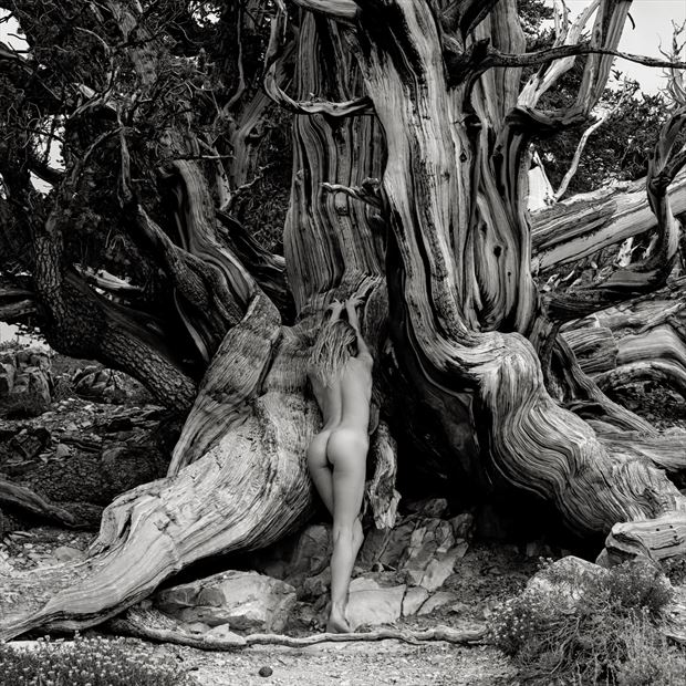 reverence artistic nude photo print by photographer randall hobbet