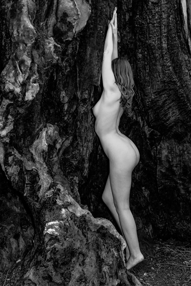 sienna in charred redwood artistic nude photo print by photographer philip turner