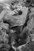 simbiosa Artistic Nude Photo print by Photographer Thomas Bichler