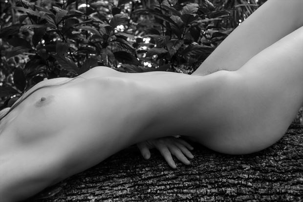 torso with hand artistic nude photo print by photographer roberts